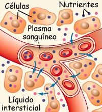 liquido-intersticial
